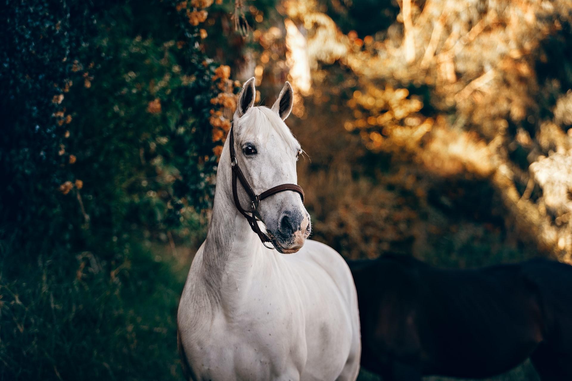 paardenverzekering