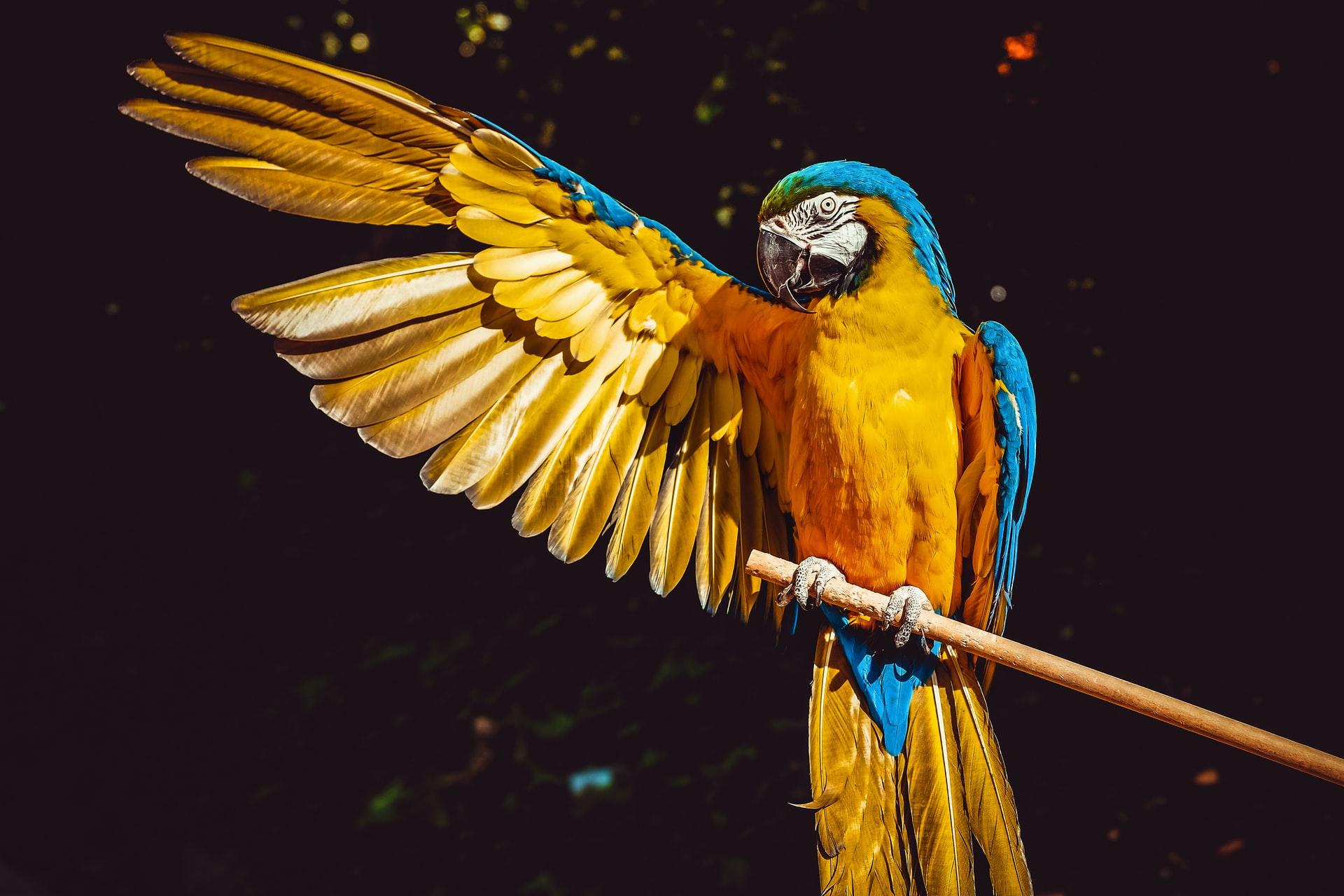papegaaienverzekering