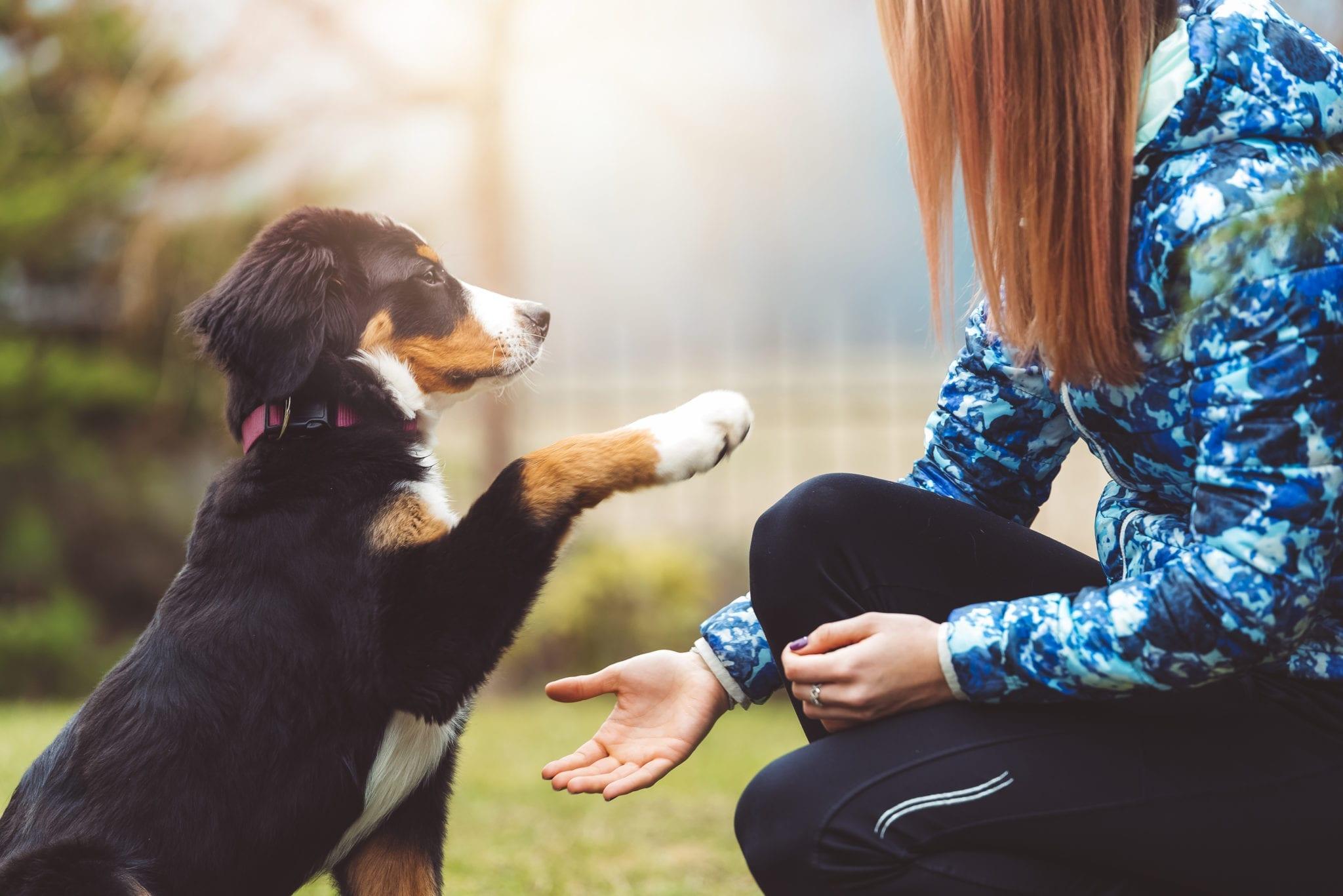 verzekering honden